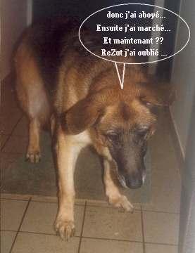 Adoption D Un Animal Chien Abandonne Au Refuge Spa Spa Chiens Et Chats De La Picoterie Adao