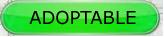 LILI - x griffon 6 ans blanc moucheté/noir- Refuge de la Picoterie à Crogis (02) Sts_adoptable